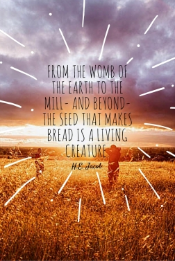 From the womb of the Earth to the mill- and beyond- the seed that makes bread is a living creature.